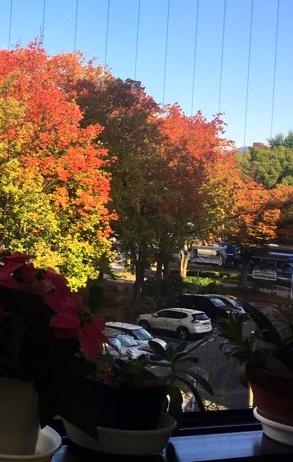 教室の窓から外を眺める